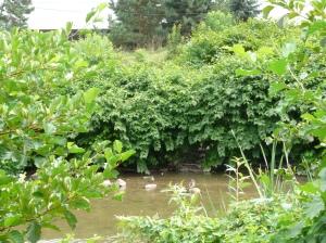Pohánkovec v povodí rieky Nitry